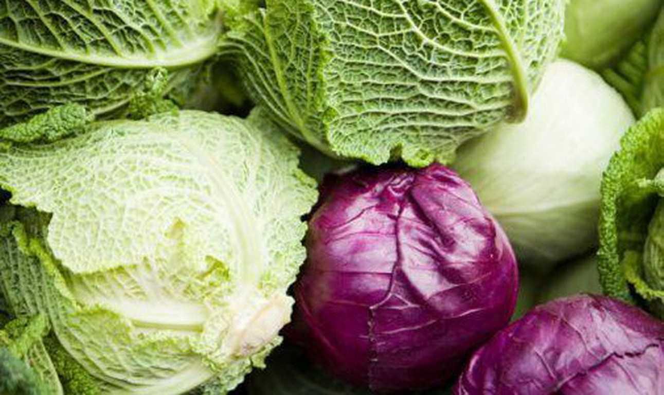 Tìm hiểu đặc điểm và công dụng của rau bắp cải